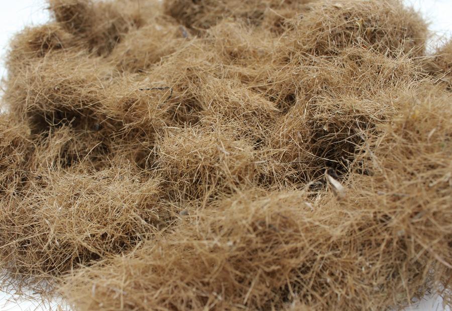 posidonia fibers
